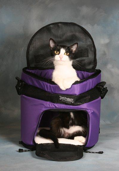 Trasportin gato: todo sobre el trasportín para gatos y sus trucos