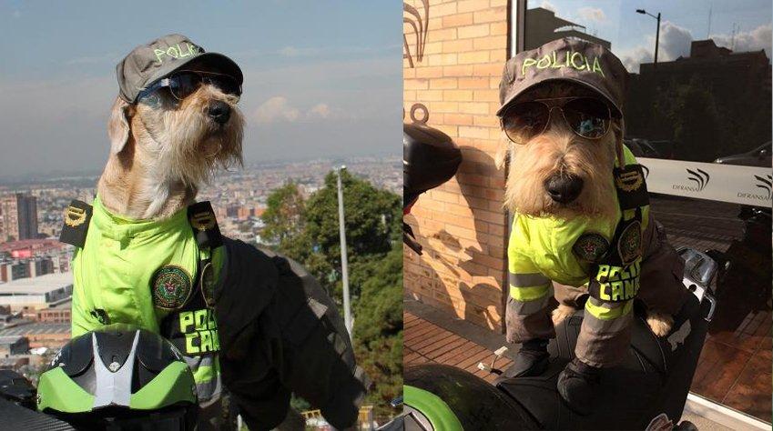 Coronel, el perro abandonado que encontro trabajo