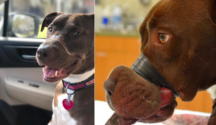 The Man who bound Caitlyn's muzzle with tape gets 5 years