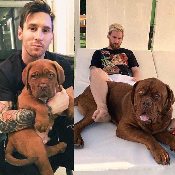 Hulk conoce el famoso perro de messi dogalize - Maniqui de perro ...