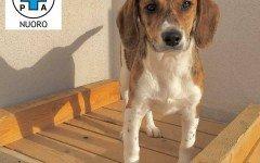 Appello per adozione: Debby cerca casa!