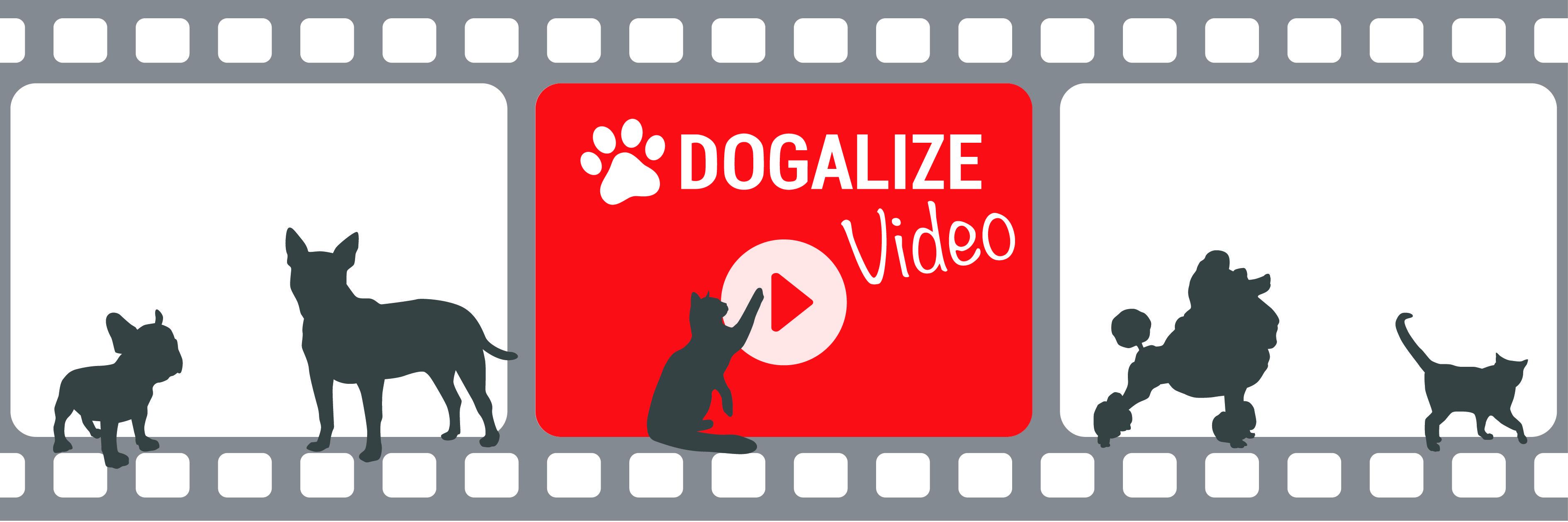 video cani con bambini