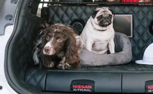 auto per cani ecco la nissan x trail 4dogs dogalize. Black Bedroom Furniture Sets. Home Design Ideas