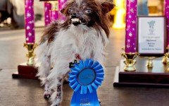 Peanut Dog - The World's Ugliest dog in 2014