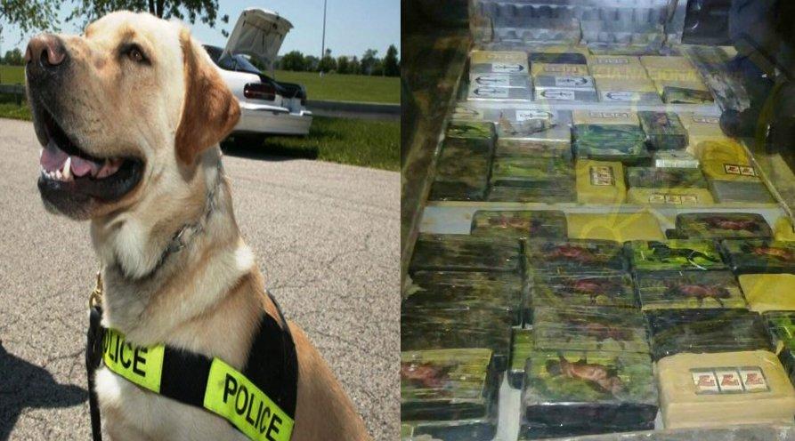 Mono, el perro policia que lucha contra el narcotráfico