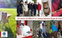 Aiutiamo Rolly, ospite dell'associazione Enpa di Como