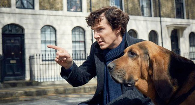 Segugio e Bulldog: razza del cane di Sherlock Holmes