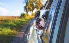 Cani che soffrono in auto come comportarsi