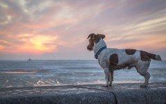 In vacanza con il cane: visitare la città di Genova