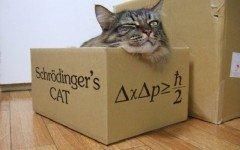 El Gato de Schrödinger: la historia del Gato de Schrödinger