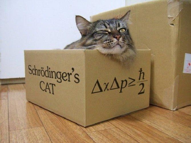 Resultado de imagen de El gato de Schrödinger