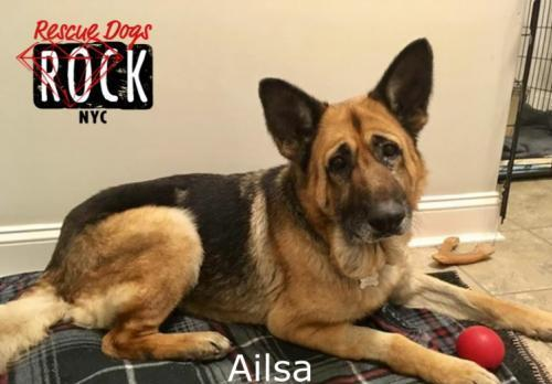Adopt a dog, your new best friend: Ailsa is looking for you!
