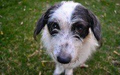 Alimentazione del cane stitico: la dieta ideale