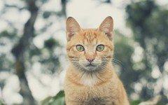 Alimentazione del gatto adulto: la dieta da seguire