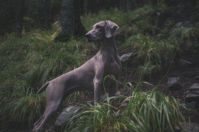 Le malattie cutanee del cane: quali sono?