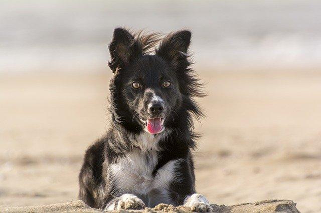 Malattia del cane quando perde il pelo: le patologie