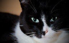 Condannato il killer dei gatti a tre anni e sei mesi