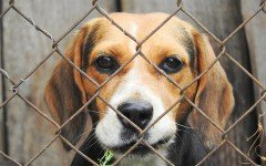What you need to know about dog kennels