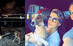 Sport e animali: Belotti e Mertens e il loro amore per i cani