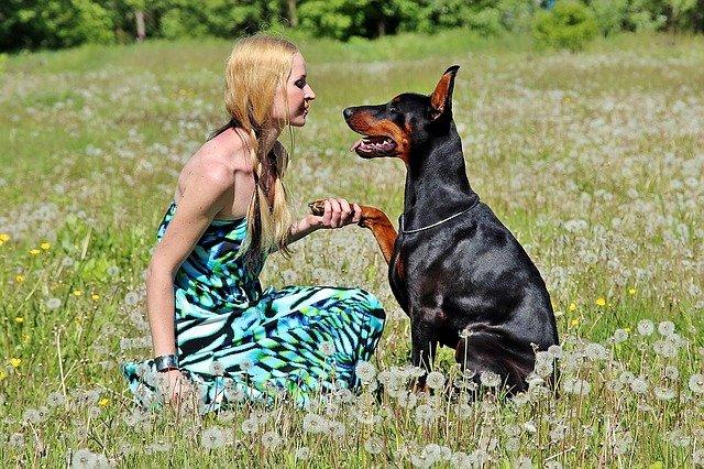 Misura il comportamento del cane con il test Dogalize