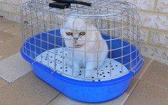 Gato Encerrado: el Gato Encerrado en casa