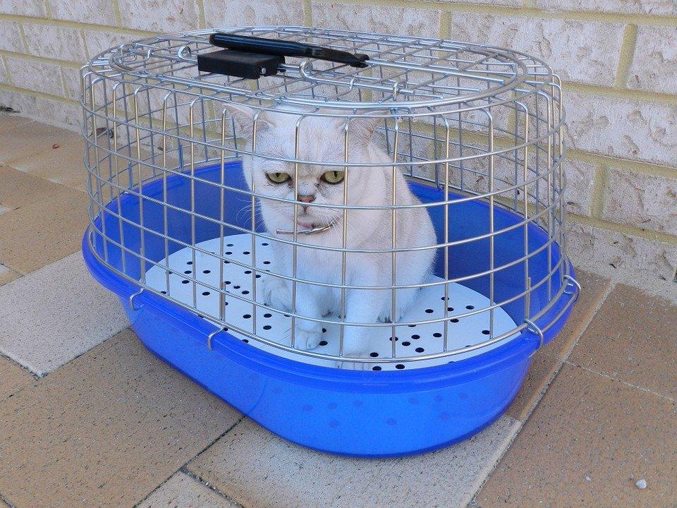Gato encerrado cuando hay un gato encerrado en casa - El gato en casa ...