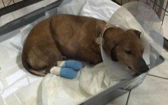 Cane torturato a Cremona: abbaiava troppo