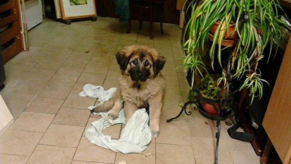 Cane salvato da un pozzo: eroe il padrone di 82 anni
