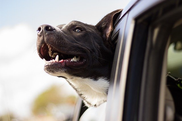 Pet taxi: never miss a vet appointment again, thanks to the service now launched in UK!