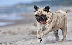 Las razas de perros arrugados más adorables
