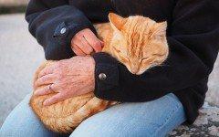 Adopcion gatos: Pasos para Adoptar Gatos