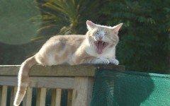 Fotos de Gatos: imagenes de gatos