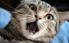 Cassazione: stressare gli animali è un reato