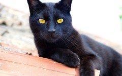 El gato negro: entre magia, brujeria y creencias populares