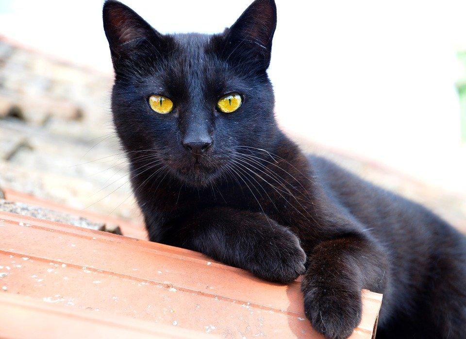 Elige tu aventura - Página 4 Cat-1841561_960_720