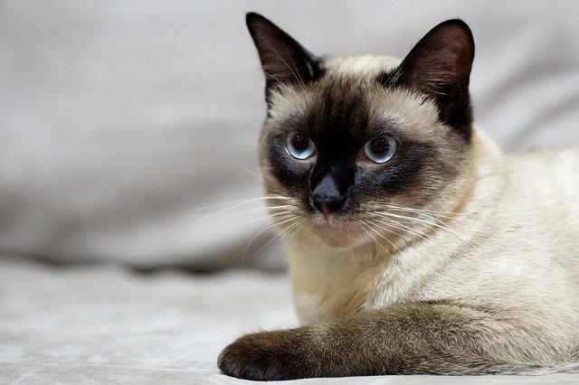 Alimentazione casalinga del gatto adulto
