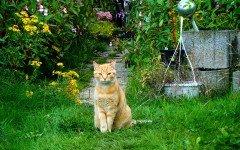 Repelente para Gatos: cuando gatos invaden tu jardín