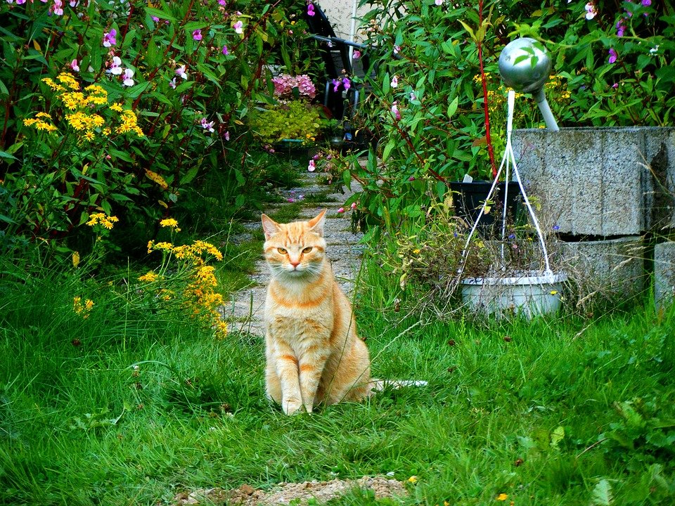 Repelente para gatos cuando gatos invaden tu jard n for Ahuyentar gatos jardin