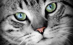 Ojos de Gato: como comunican los gatos
