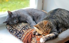 Soñar con Gatos: el Significado y la interpretación