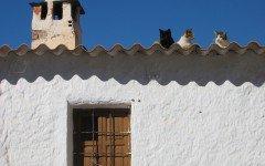 Estaba el señor don gato sentadito en su tejado