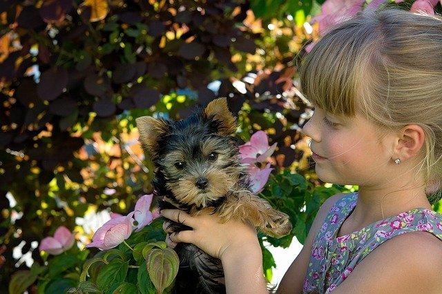 Malattie del cane nei bambini: quali sono?