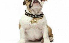 Collar de perro: todo lo que debes saber sobre el collar