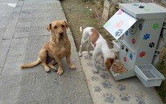 """Retiran comedero para perros callejeros por """"invasion"""""""