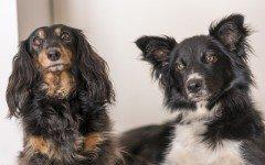 Malattie infettive del cane: quali sono le più frequenti