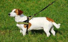 Pettorina per cani: i modelli e come funziona