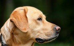 Alimentazione casalinga del cane con insufficienza renale