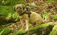 Arnes para perros: ¿una solución?