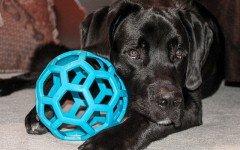 Giochi per cani a casa: come divertirsi con il proprio peloso