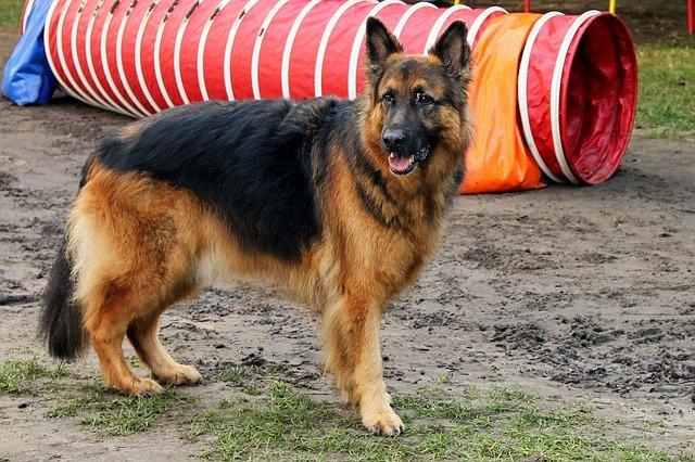 Giochi per cani anziani: come divertirsi con Fido